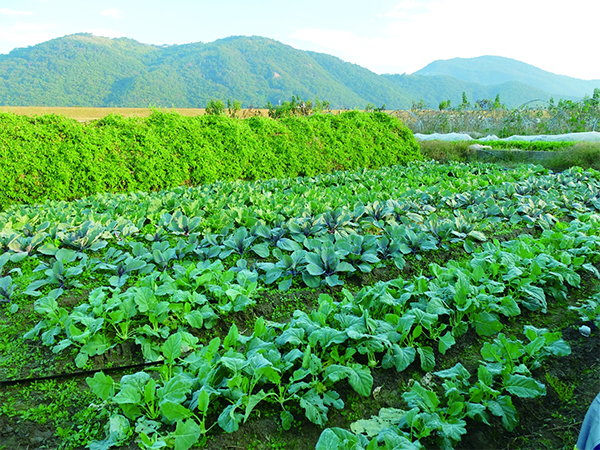 ミモレ農園の画像