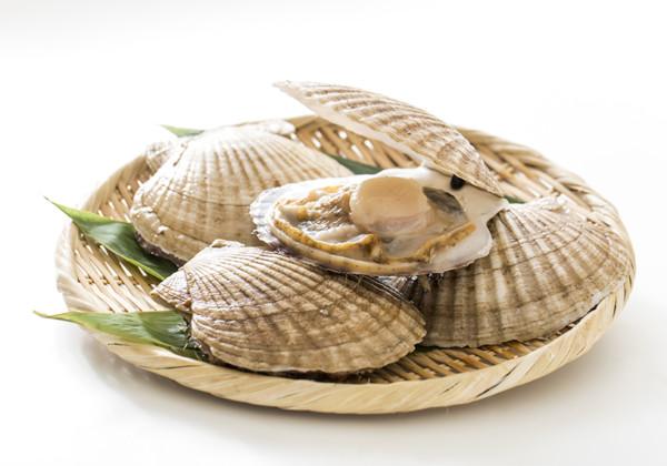 帆立貝の画像