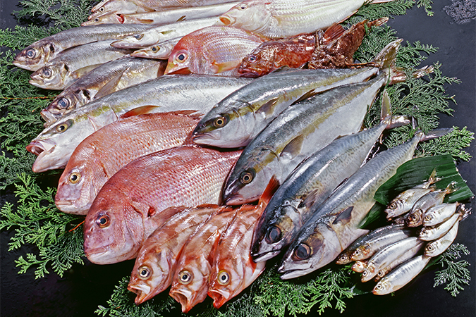 EPAの多いお魚は?!