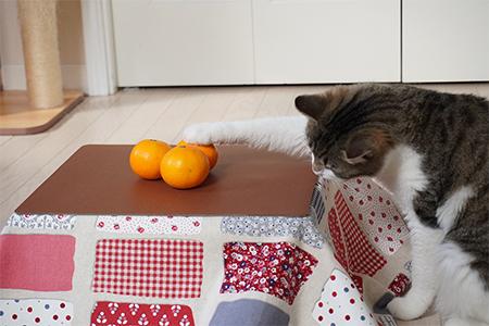 こたつ猫の写真④