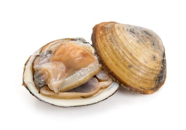 ホッキ貝の画像