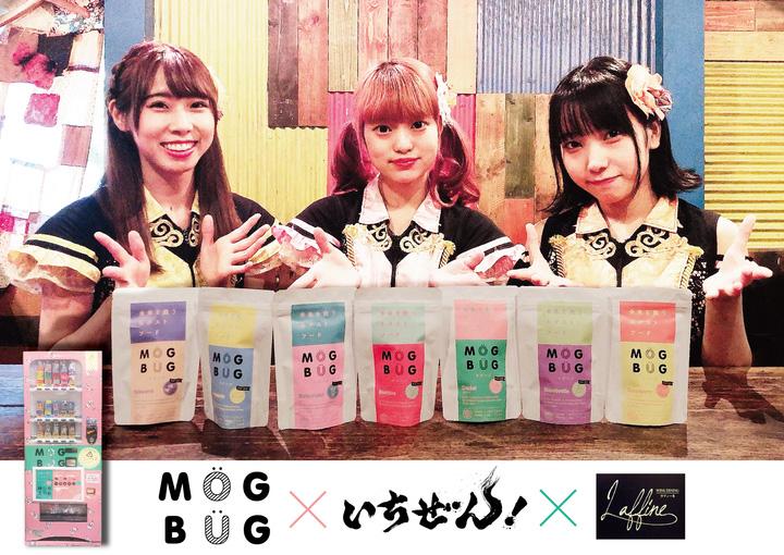 MOGBUG × いちぜん!