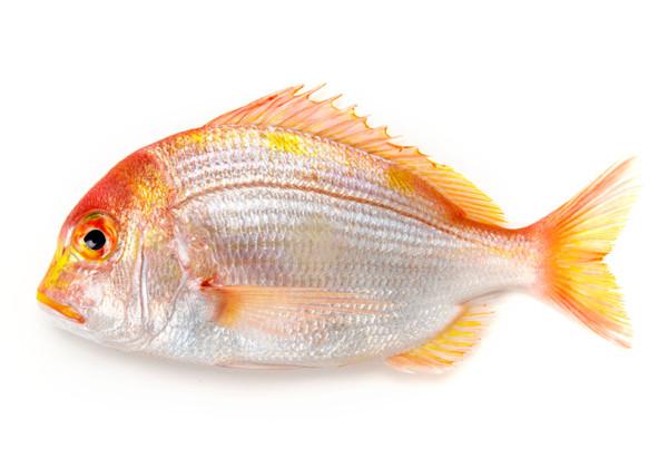 黄鯛の画像