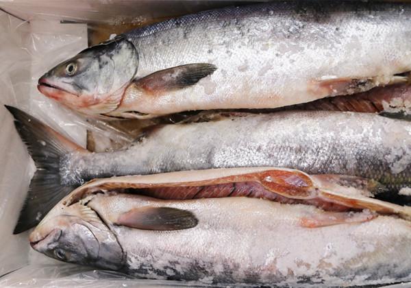 塩鮭の画像