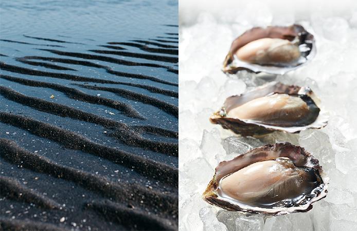 日本初の干潟養殖牡蠣 「ひがた美人」