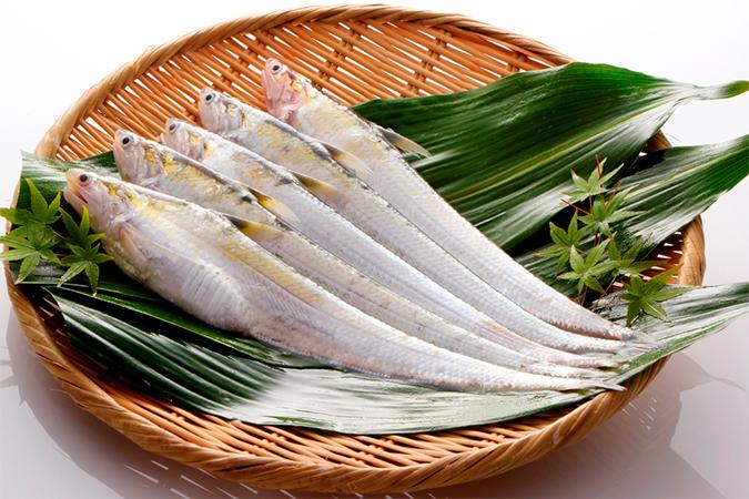 幻の魚「えつ」