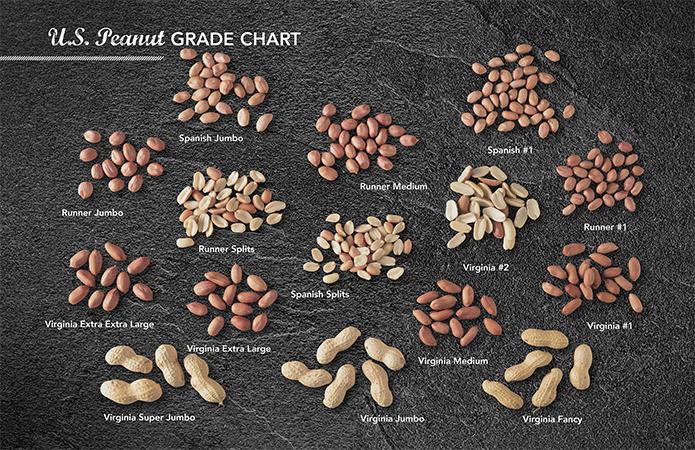 ピーナッツの種類の画像