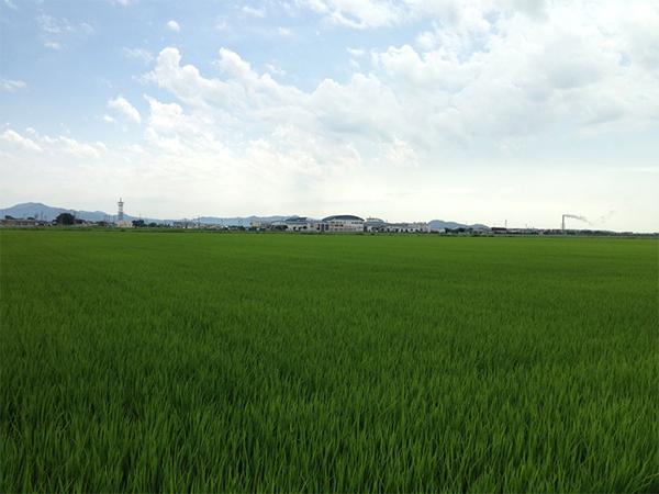 青田の画像
