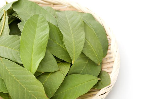 グァバの葉