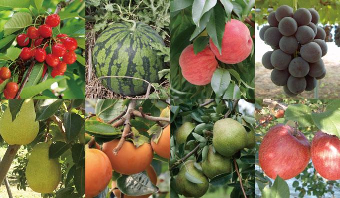 8種類の果物イメージ画像