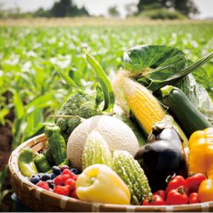 広大な敷地でのびのび育った夏野菜