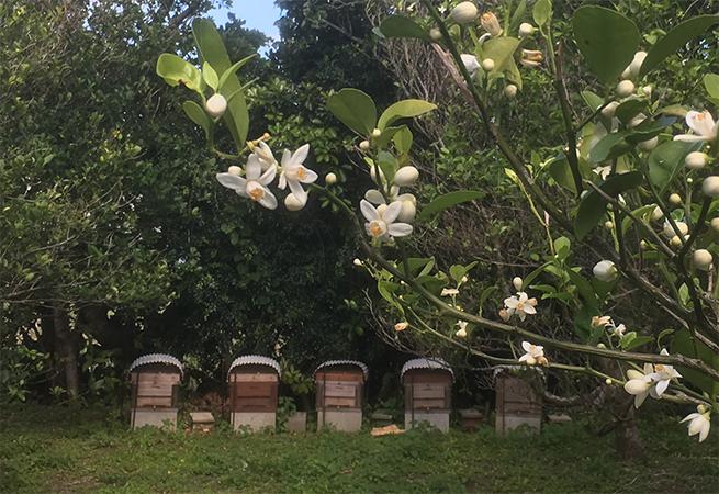 自然豊かな島での養蜂