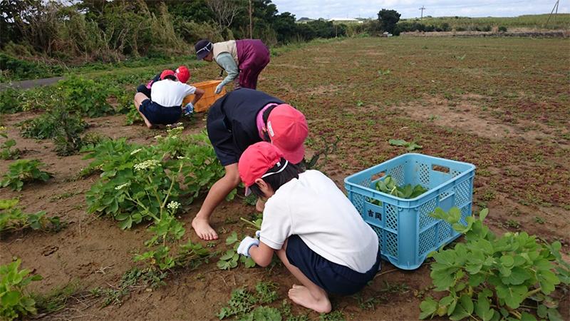 サクナの収穫体験学習