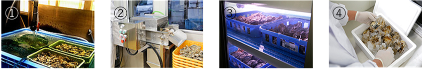 新鮮さを追求した牡蠣の輸送方法
