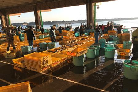 銚子漁港の様子